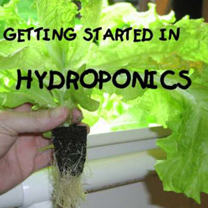 Home Hydroponics For Dummies