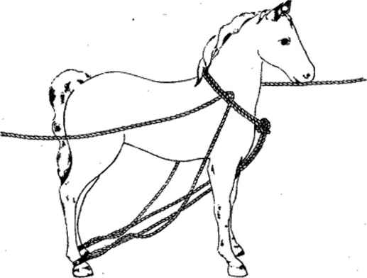Casting Horse Drawing