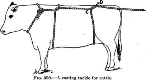 American Method Cattle Casting